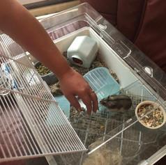 hamster met kooi.jpg