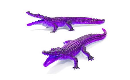 Vil die paarse krokodil