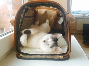 How To Get Your Cat To Love Their Carrier