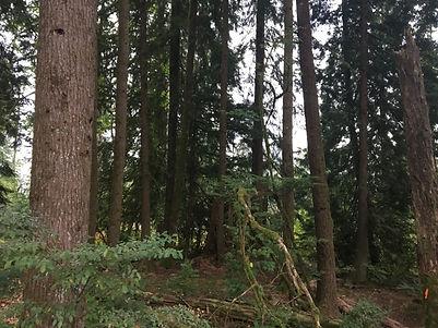 David Avenue Forest.JPG