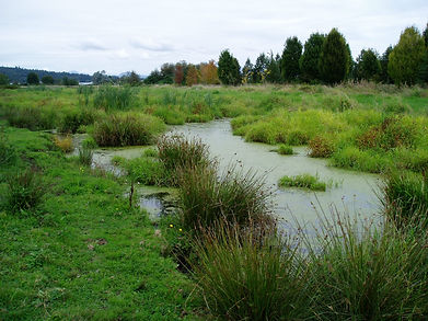 North Creek Wetland.jpg