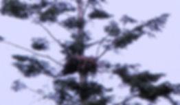 nest pic1.jpg