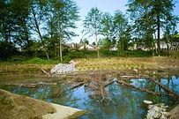 ba blacktop pond.jpg