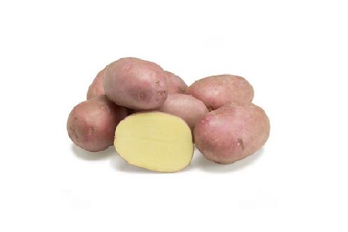 BIO Aardappel Alouette rood 1KG