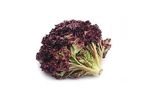 Lollo rossa salade