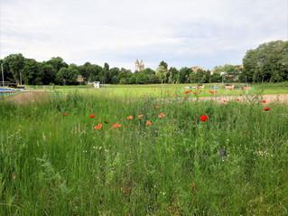 Blau-Weiß startet Vereinsgarten