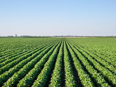 Argentina y el desafío de pasar a ser el polo alimenticio del mundo