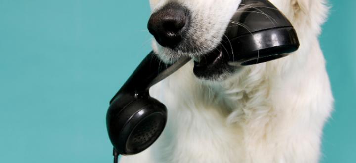 dog phone.png