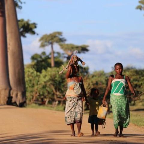 Groupe de travail Madagascar/ Pays de La Loire Coopération Internationale avec le Pr JA Rakotoarisoa de Hetsika