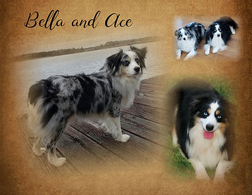 Bella and Ace-006.jpg