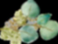 Eucalyptus (12) INVERT.png