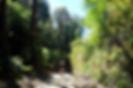 Selva valdiviana mtb tour