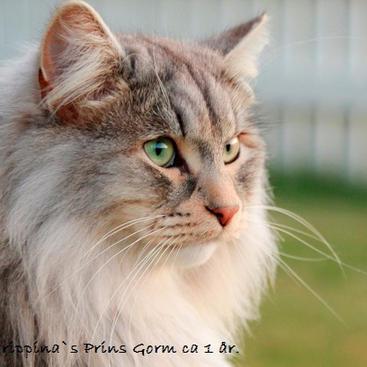 Prins Gorm ca. 1 år