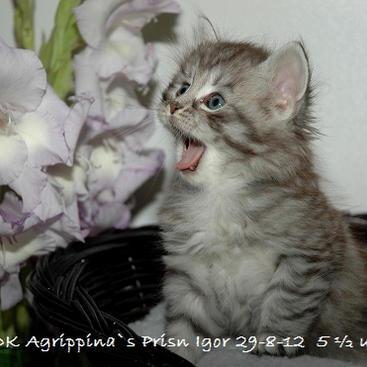 Prins Igor 29-8-2012