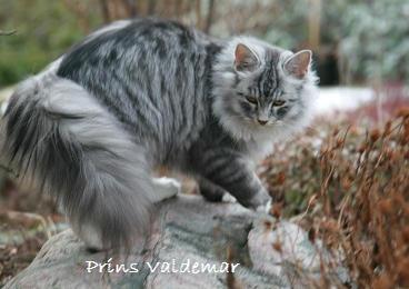 Prins valdemar
