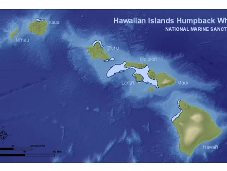 Humpback Whale Marine Sanctuary