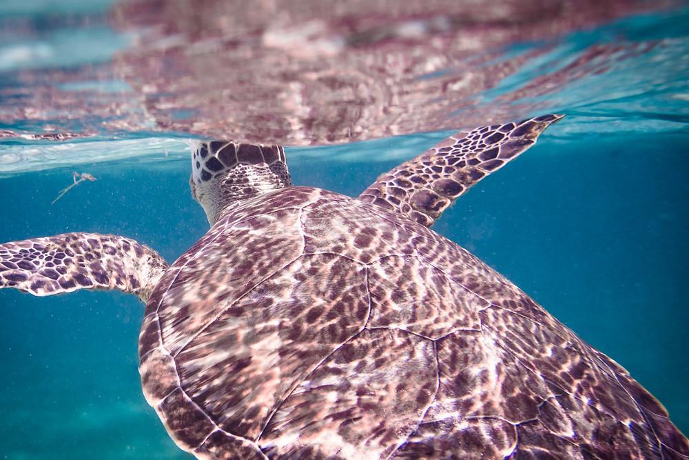 air tortue turtle animal ocean sea mer