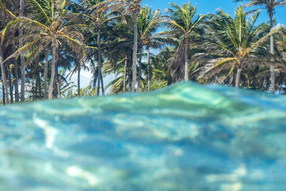 sea ocean wave palmtree tree sand beach island