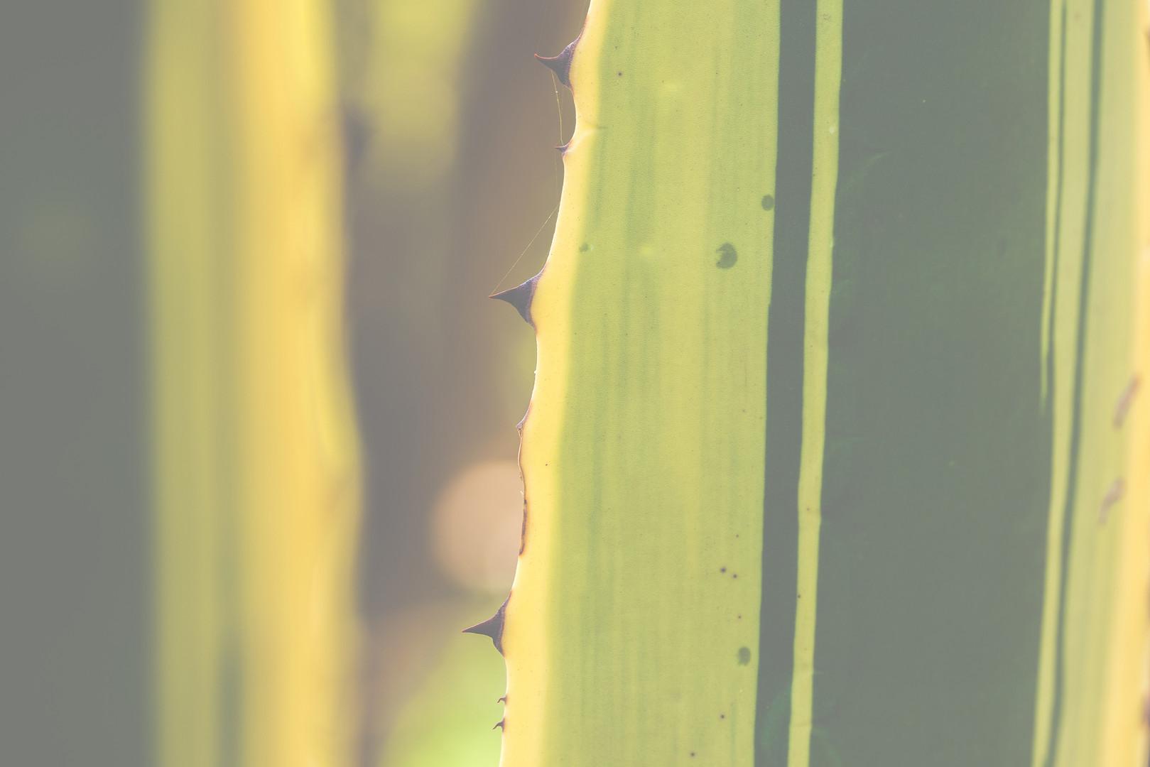 Geometrical Cactus