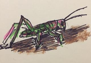I Like Grasshoppers