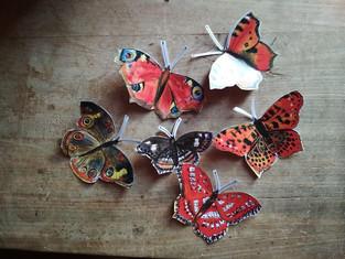 motýli 005.jpg