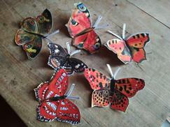 motýli 06.jpg