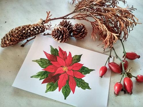 Pohled vánoční hvězda