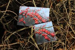 Bobule červené na větvičce