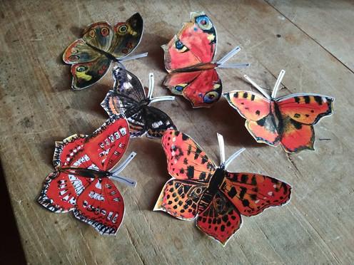 motýli 03.jpg
