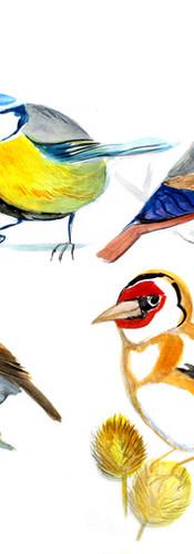 Ptáci I.