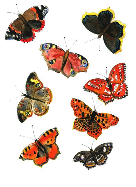 Motýli babočkovití