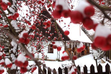 Chaloupka s jablíčky pod sněhem