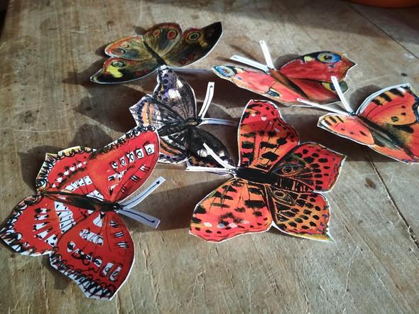 motýli 01.jpg