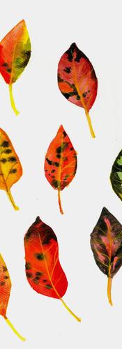 Podzimní jabloňové listy