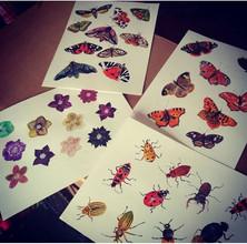 Motýli, můry, čemeřice, brouci