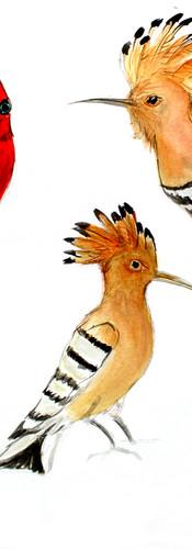 Ptáci II.