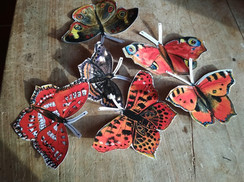 motýli 02.jpg