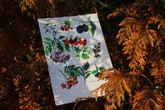 Podzimní bobule
