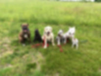 ri dog training, puppy training, obedience, dog classes, rhode island dog training
