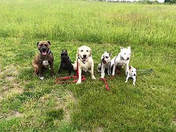 ri dog training, puppy training, obedience, dog classes, rhode island dog training