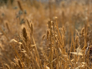 Shavuot and Waiting