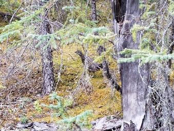 Day #5:  Muncho Lake, BC to Laird Hot Springs, BC