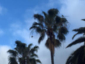 wild zons in tree.jpg
