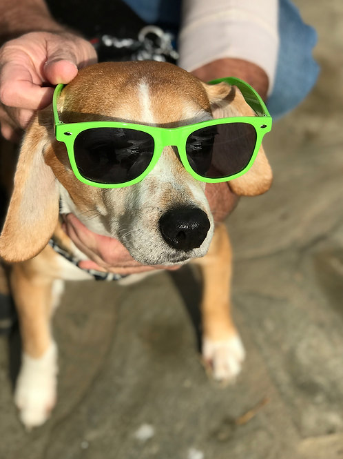 SoCal Parrot Sunglasses