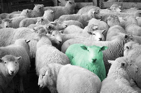 green sheep.jpg