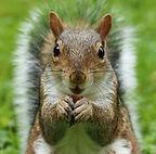 Squirrel-1_edited.jpg
