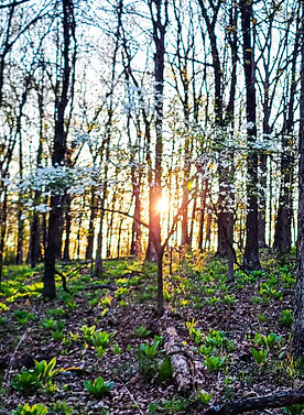 Our forests-at-sundown.jpg