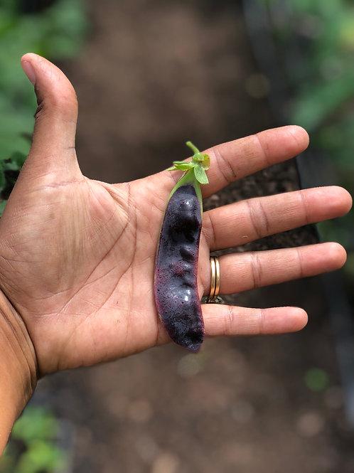 Purple Snow Peas