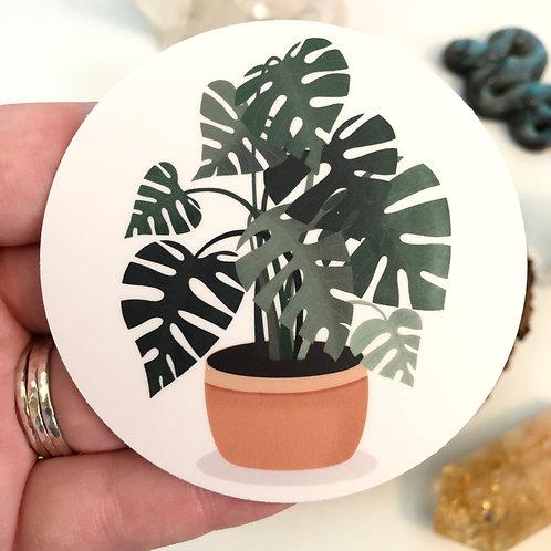 Monstera Plant Vinyl Sticker