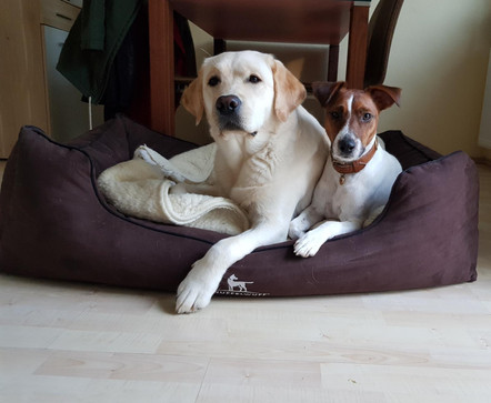 Maple & Bud...so unschuldig :-)